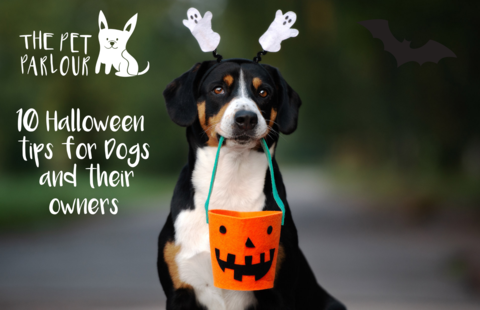 halloween safety for dogs and their owners