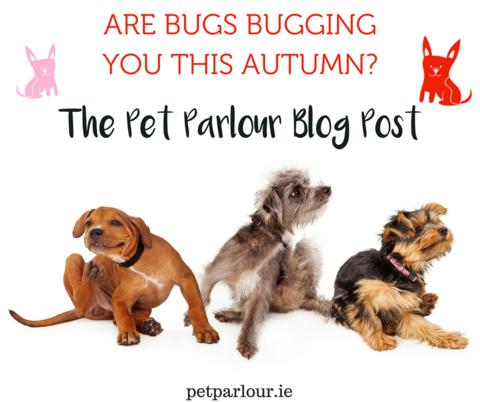 flea powder pet food shop dog food natural Dublin Ireland