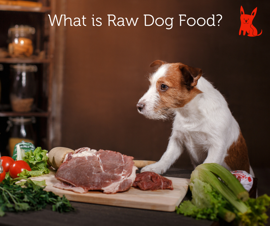 What_is_Raw_Dog_Food.png?v=1508168654