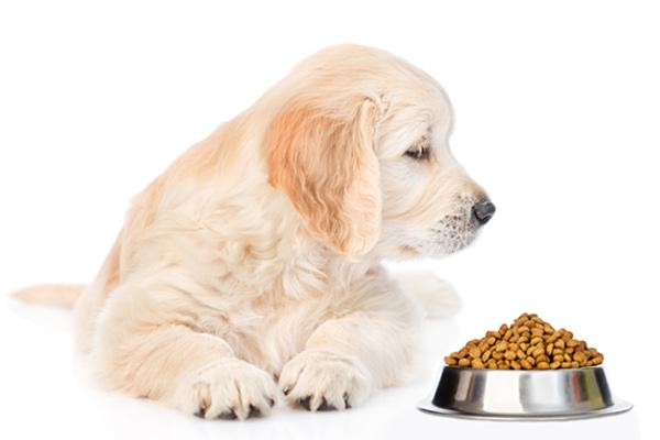 buy dry dog food Dublin, Ireland