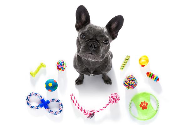 Buy dog toys Dublin, Ireland