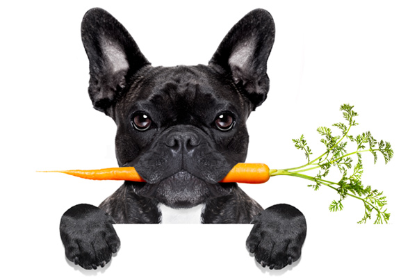 buy raw dog food Dublin, Ireland