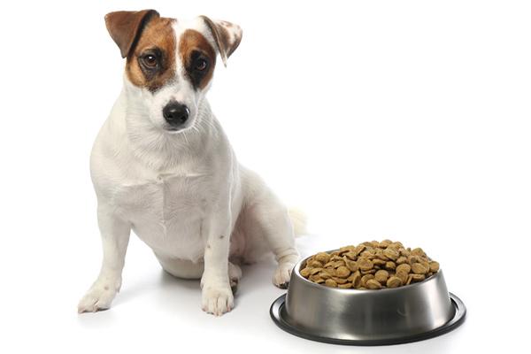 Buy grain free dog food Dublin, Ireland