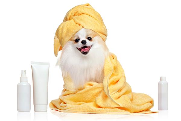 buy dog hygiene products Ireland