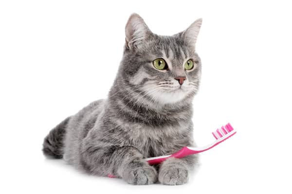 buy cat hygiene products - Dublin, Ireland