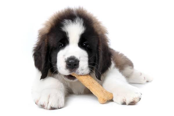 buy Dog Treats - dublin, Ireland