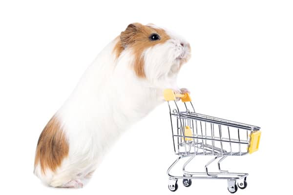 buy small pet food products - Dublin, Ireland
