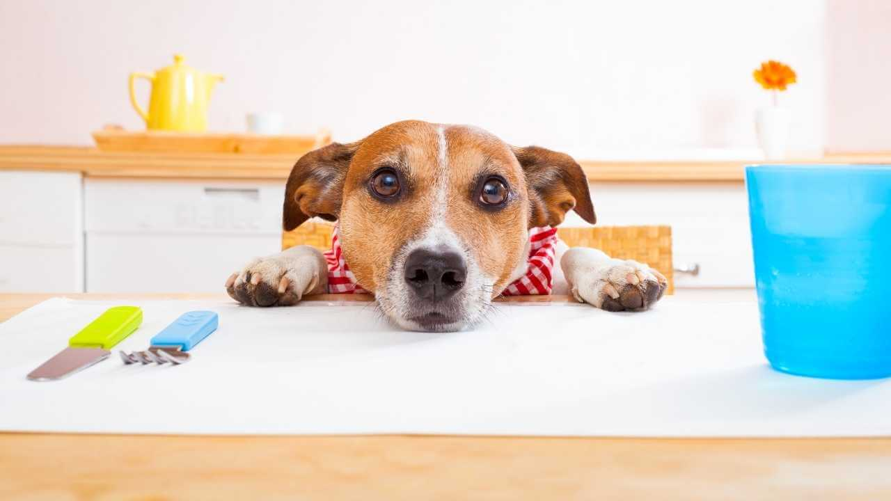 Should you feed your dog raw meat?