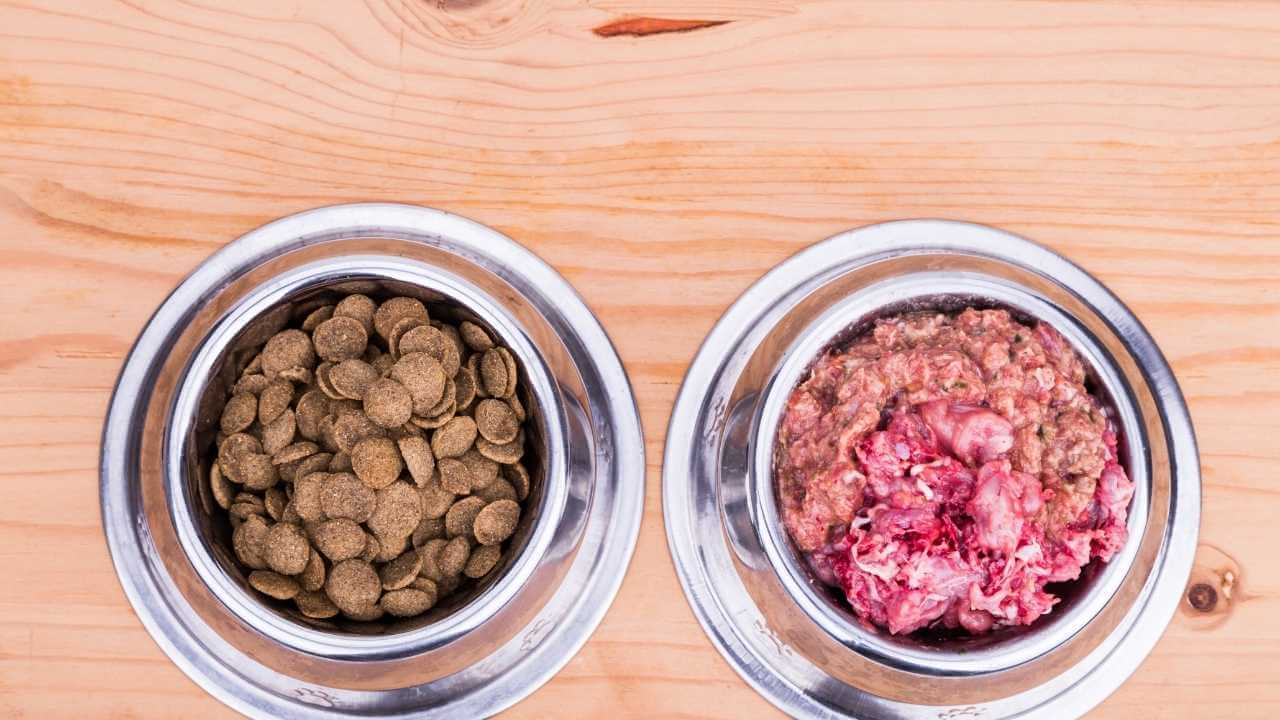 should I feed my dog raw dog food in ireland?