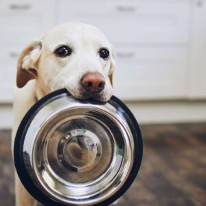 What are the benefits of a grain free diet for a dog?