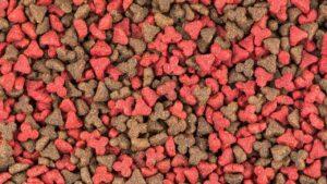 processed dog food
